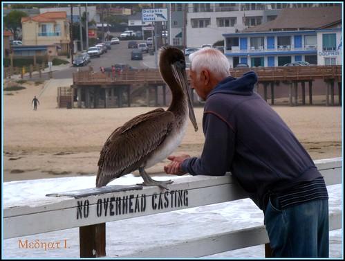 ocean pier pacific pelican medhathi mygearandme mygearandmepremium mygearandmebronze mygearandmesilver mygearandmegold coastalandwaterviewsbymi