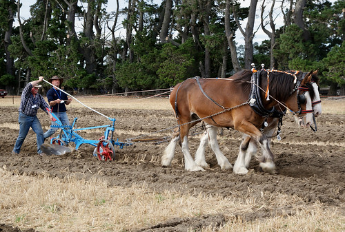 Horse Ploughing (17)