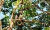 Harpy eagle by DJWGA