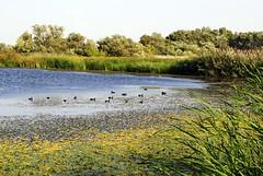 2012. augusztus 24. 17:14 - Tiszavölgy Kalandtúra - Gyönyörű madárvilág