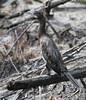 Little Cormorant by Wild Chroma