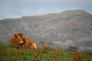 Rydal moo | by Fiona in Eden