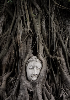 the root of buddhism | by Eddy Alvarez