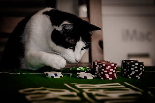 Gambling cat | by gchampeau