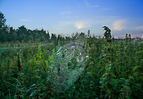 sunrise canon spider beds web bedfordshire dew 7d nettles 365 project365 stotfold 248365 elementsorganizer