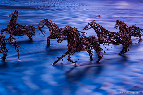 sunrise grandrapids flickraward artprize2012