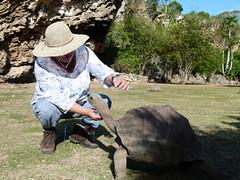 wo, 22/08/2012 - 14:16 - 030. Kroelen van een landschildpad