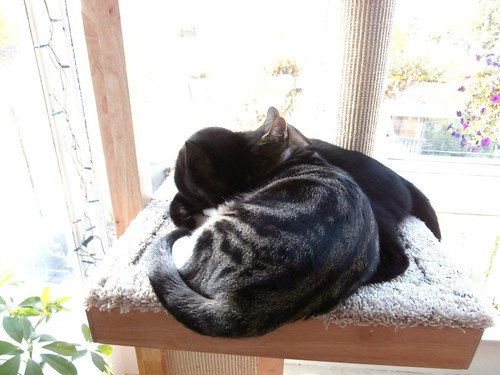 Cats Resting on Cat Power Tower | by www.metaphoricalplatypus.com