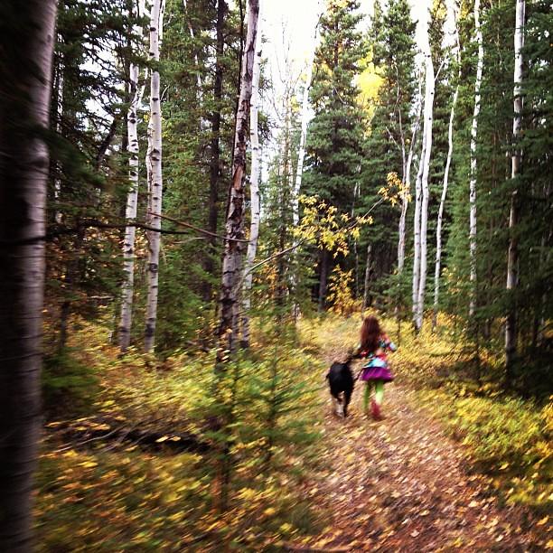 Walk in the woods #alaska