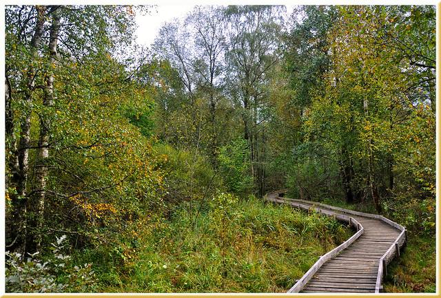 Sentier pédagogique - Saint-Brisson (Nièvre