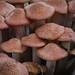 Mushrooms & Fungi 2012