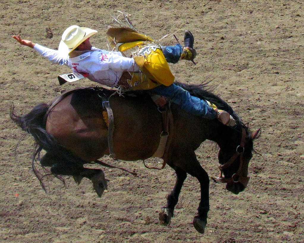 Saddle Bronc Calgary Stampede Rodeo Challengegametry