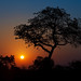 Image: Sunset on the African Savannah