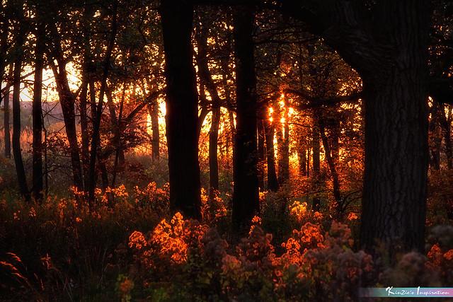 Autumn Sunset Glow *A Beautiful Nature*