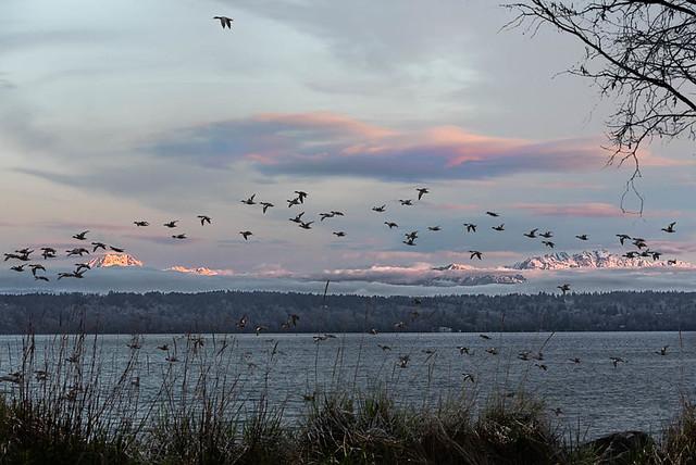 Puget Sound Morning