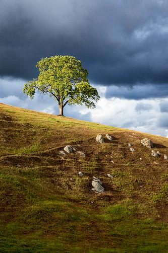 california santaclaracounty sierravista sierravistaopenspacepreserve usa unitedstates cloud hill landscape oak outdoor sky spring tree