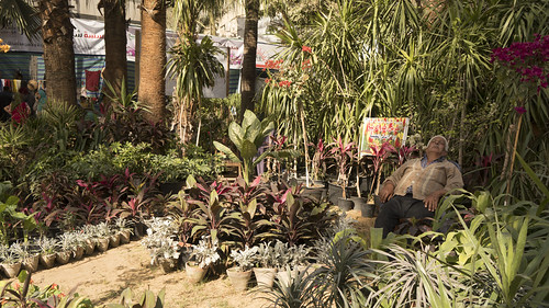 Taking a quick nap at Egypt's Spring Flowers Fair 2018 | by Kodak Agfa