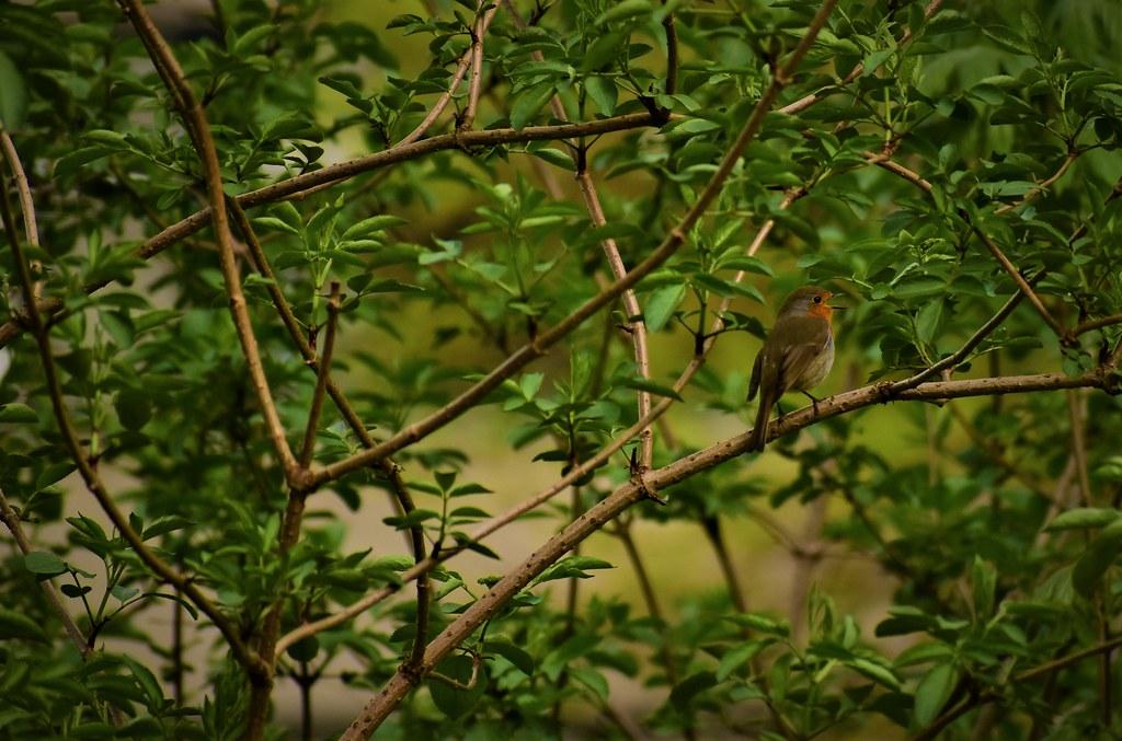 Image result for bird in bush