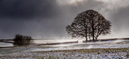 sheffield sheephillroad houndkirk snow flurries snowflurry backlighting spindrift wind winter storm sunshine march gate wall tree silhouette