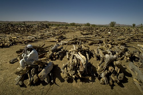 africa chad firewood treguine sudaneserefugees ouaddairegion firewooddistribution