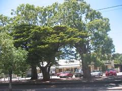 Bassett Memorial Tree, 2006