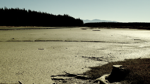 inlet estuary mudflat mudflats shine shiny cloudless trees pines outdoors simplicity peaceful expansive waimeainlet rabbitisland nelson southisland newzealand duncancunningham duncamc42 olympus stylus tg4 compactcamera