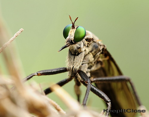 Top Bug .