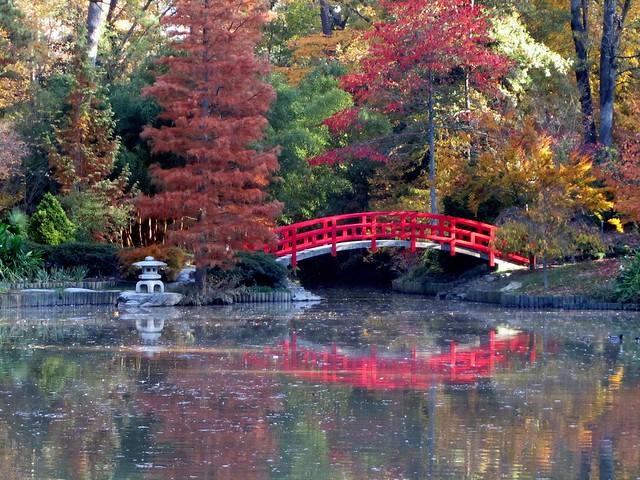 Japanese bridge @ Sarah Duke gardens