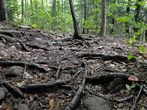 Kaaterskill Wild Forest, Catskills, NY | 30ag12_936 ...