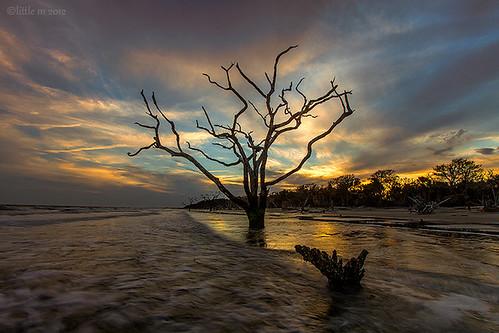 sunset beach southcarolina charleston deadtree thesouth botanybay atlanticocean edistoisland theboneyard coastalsouthcarolina bylittlem aseaofunmemory