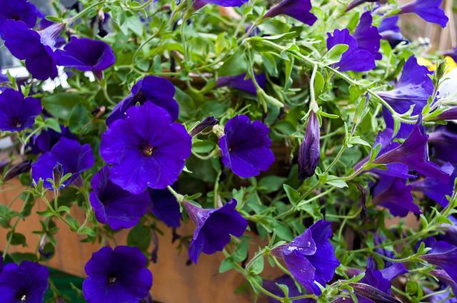 Garden 2012 08