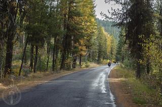 Autumn trees along Lick Creek Road