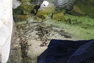 Yosemitel-Park-11-3-09 (59) | by gideonariel1