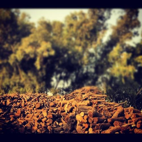 wood pakistan tree nature leaves lahore smnrj smnrj7 samanarooj