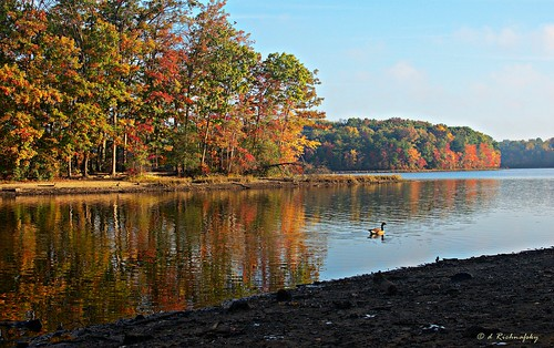 park autumn trees sky lake color reflection bird fall nature water colors leaves fog 35mm mirror virginia woods nikon paint goose canvas foliage va reflective fairfax nikkor pallet glimmer 42 52 d90 4252