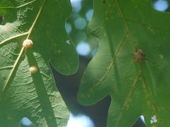 日, 2012-09-23 13:54 - 寄生虫