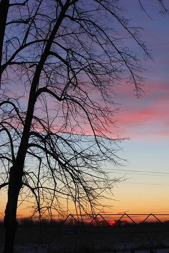 pink blue sky orange lines silhouette skyline sunrise colorful power branches frame leaning arching basswood