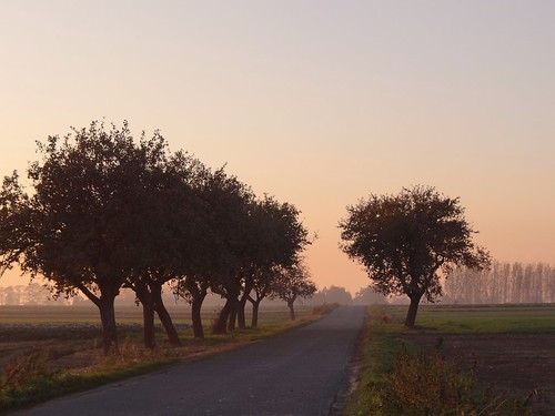 road autumn trees sun sunlight mist fall nature sunshine yellow misty fog landscape gold golden countryside path foggy poland polska sunny sunlit countryroad tubądzin