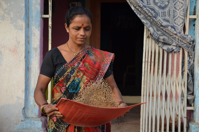 farmer Gade's wife sorting dhanshakti millet seeds