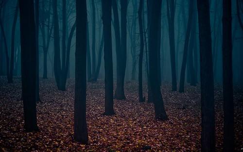 gloomy forest | by gorchakov.artem