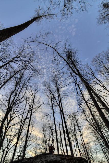 Forest, Clinton Elmore, Putnam Co, TN