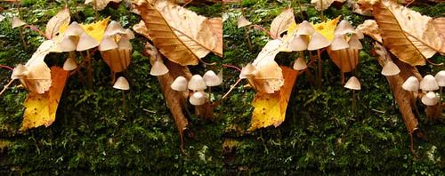mushrooms crosseye stereo tremblant