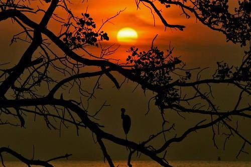 sunset nature paradise crane johor muar thegalaxy westmalaysia mygearandme