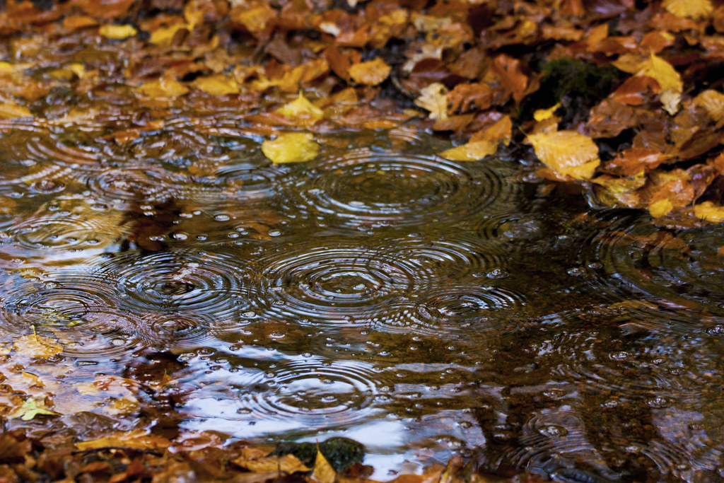 Image result for fall rain photos