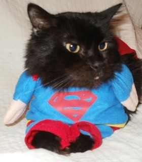 Haha! Superman Kitty (Can't Stop Laughing) | by Petful.com
