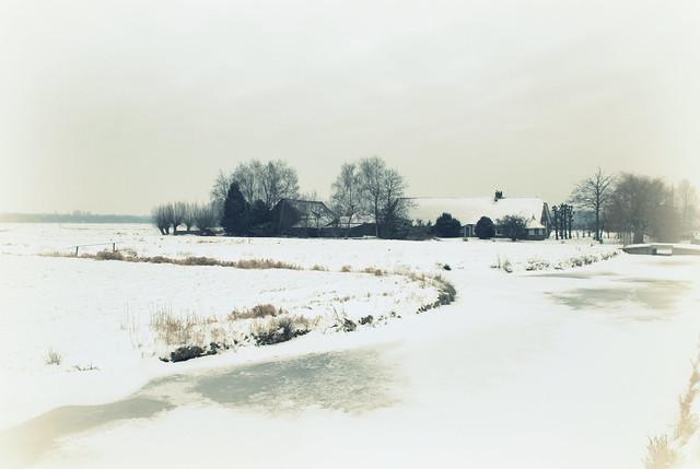 white wideness