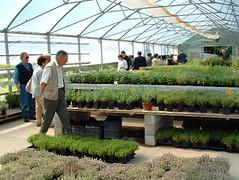 La serra del Giardino delle Erbe