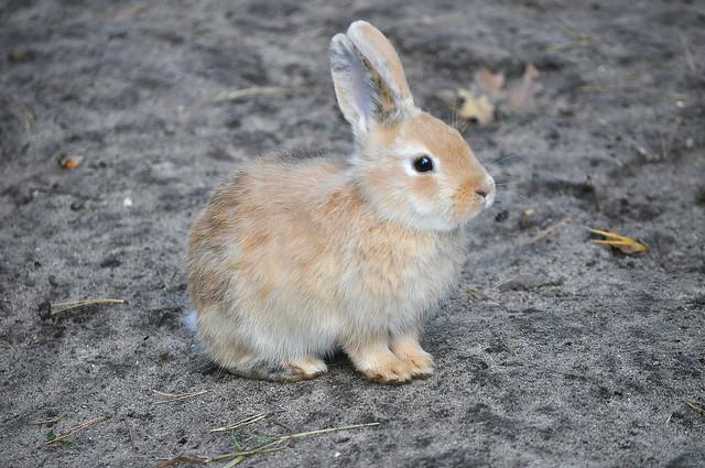 We all love bunnys (2)