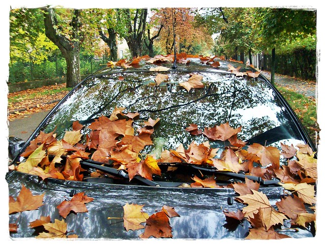 Car and the autumn-Őszi autó