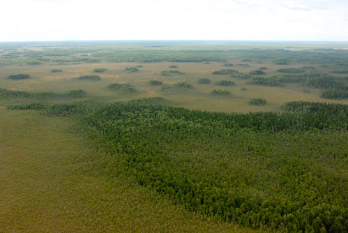 The lanscape of residual forest islands, mineral forested land and upcoming bog